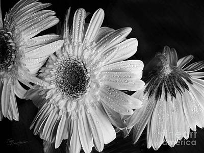 Photograph - Gerbera Daisies Black And White by Tom Brickhouse