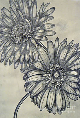 Daisy Drawing - Gerbera Daisies by Cecilia Stevens