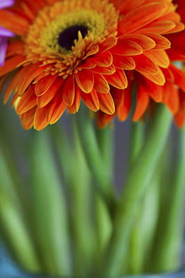 Photograph - Gerbera Daisies In A Vase by Zoe Ferrie