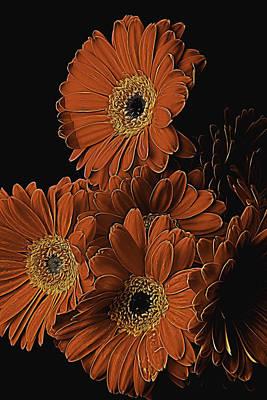 Gerbera Daisy Photograph - Gerbera Daisy Abstract by Garry Gay