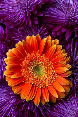 Chrysanthemums Photograph - Gerbera Daisy And Mums by Garry Gay