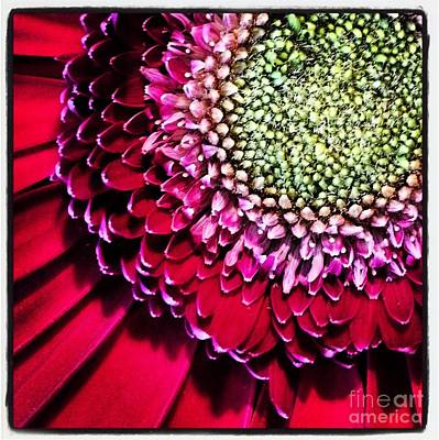 Gerbera Flower Art Print