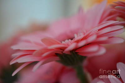 Photograph - Gerbera Flower by P S