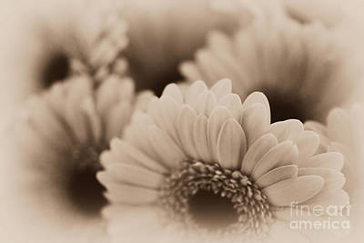 Photograph - Gerbera Flowers by P S