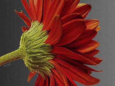 Gerbera In Red Art Print by Megan Washington