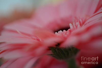 Photograph - Gerbera by P S