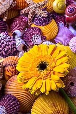Chrysanthemums Photograph - Gerbera With Seashells by Garry Gay