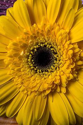 Gerbera Yellow Daisy Art Print by Garry Gay