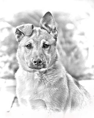 Lucille Ball - German Shepard Puppy by James BO Insogna