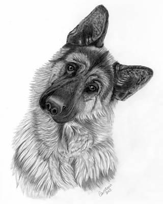 German Shepherd Drawing By Carol Doran