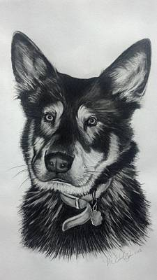 Drawing - German Shepherd/chow Mix by Michelle Harrington