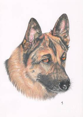 Scottish Dog Drawing - German Shepherd Dog by Yvonne Johnstone