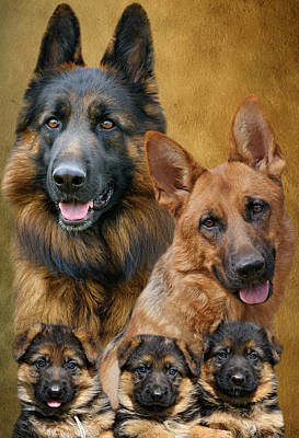 German Shepherd Family Collage Print by Sandy Keeton