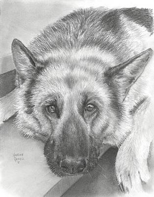Police Art Drawing - German Shepherd by Heather Gessell