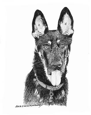 Many Colors Drawing - German Shepherd Kimo by Jack Pumphrey
