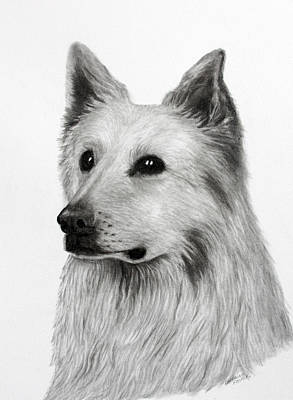 Drawing - German Shepherd by Lorraine Foster