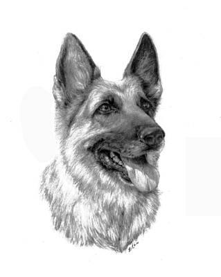 Police Dog Drawing - German Shepherd by Lou Ortiz