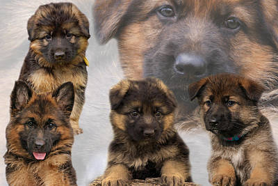 German Shepherd Puppy Collage Art Print by Sandy Keeton