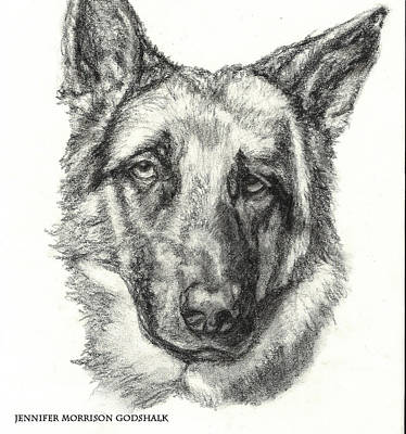 Drawing - German Shepherd Sketch No.1 by Jennifer Godshalk