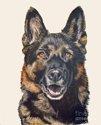 Pastel - German Shepherd Ukon by Ann Marie Chaffin