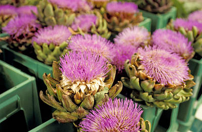 Artichoke Photograph - Germany Aachen Munsterplatz Artichoke Flowers by Anonymous