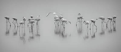 Flamingos Photograph - Get Down by Ahmed Thabet