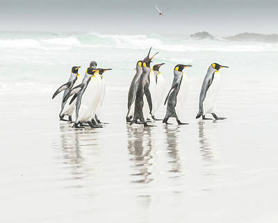 Penguin Photograph - Get Lost ! by Usha Peddamatham