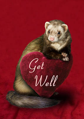 Photograph - Get Well Ferret by Jeanette K