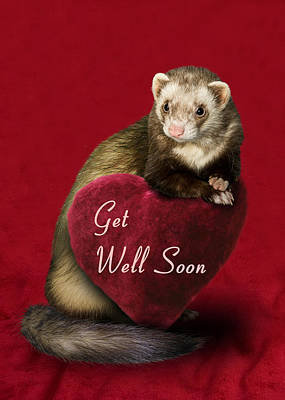 Photograph - Get Well Soon Ferret by Jeanette K