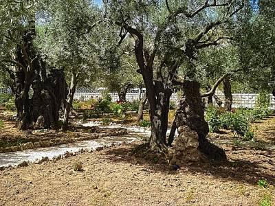 Photograph - Gethsemane by Sandra Pena de Ortiz