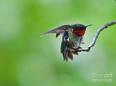 Photograph - Getting Jiggy With It by Cheryl Baxter