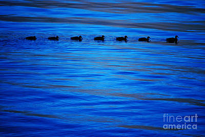 Getting Your Ducks In A Row Art Print by Cynthia Lagoudakis
