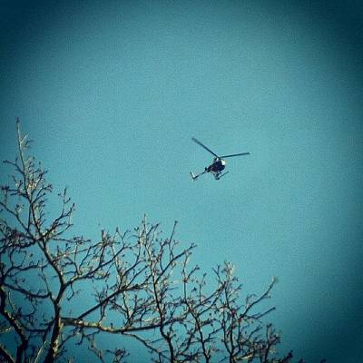 Tree Photograph - Ghetto Bird by Charlie Cliques
