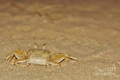 Photograph - Ghost Crab 2 by Lynda Dawson-Youngclaus