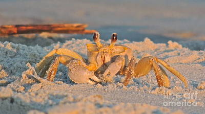 Photograph - Ghost Crab by Eve Spring