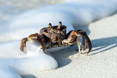 Ghost Crab In The Foam Line Art Print