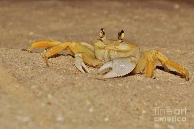 Photograph - Ghost Crab by Lynda Dawson-Youngclaus