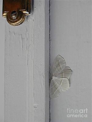 Ghost Doorbell Moth Art Print