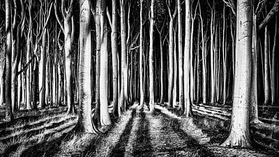 Tights Photograph - Ghost Forest by
