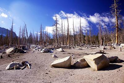 Photograph - Ghost Forest 3 by Michael Courtney