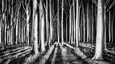 Ghost Forest Art Print by Pixxelpark