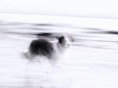 Photograph - Ghost Guardian  by Marcia Lee Jones