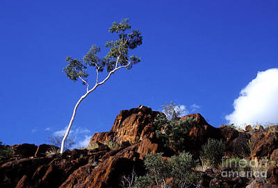 Photograph - Ghost Gum by Steven Ralser