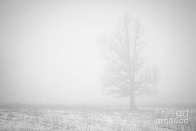 Photograph - Ghost In The Mist by Julie Clements
