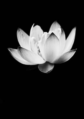 Photograph - Ghost Lotus by Priya Ghose