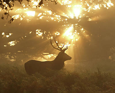 Stag Photograph - Ghost Of The Forest by Greg Morgan
