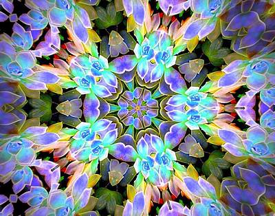 - Ghost Plant Kaleidoscope 1 by Sheri McLeroy