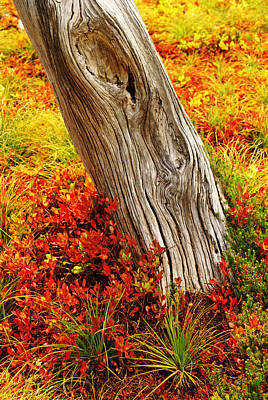Photograph - Ghost Tree And Autumn Colors by Daniel Woodrum