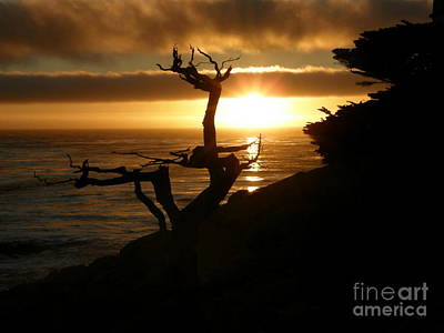 Photograph - Ghost Tree At Sunset by Bev Conover