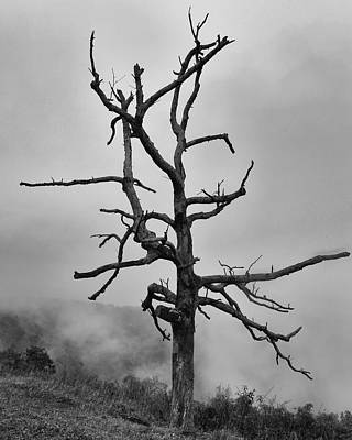 Photograph - Ghost Tree by Harold Rau